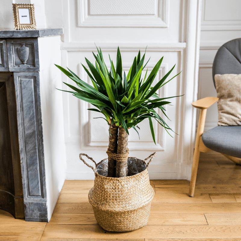 Interflora Yucca - Livraison par Chronopost - L'atelier Interflora - Interflora
