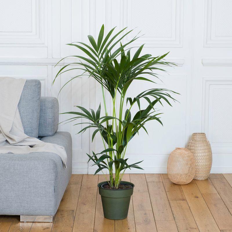 Interflora Kentia - Livraison par Chronopost - L'atelier Interflora - Interflora
