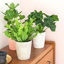 Interflora Trio de plantes vertes + cache pot