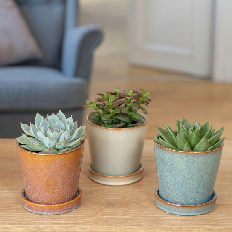 Interflora Trio de Succulentes - Livraison Plantes Grasses - Idée Cadeau - Interflora