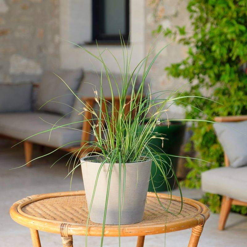 Interflora Carex - Livraison par Chronopost - L'atelier Interflora - Interflora