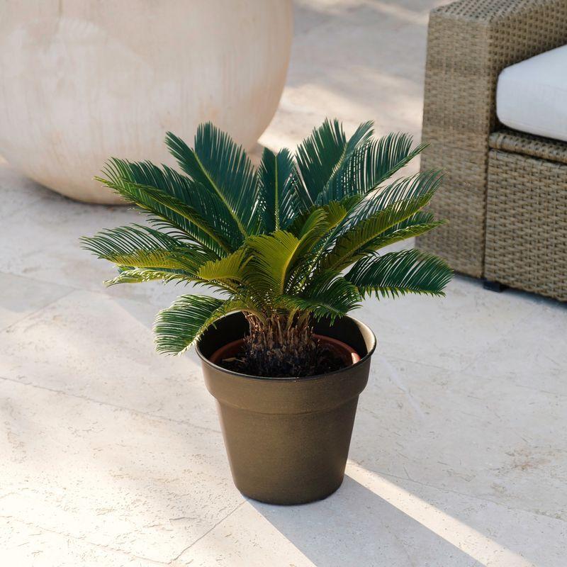 Interflora Cycas - Livraison par Chronopost - L'atelier Interflora - Interflora