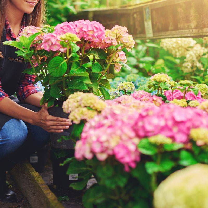 Interflora Plante du Fleuriste - Livraison en 4H - Interflora
