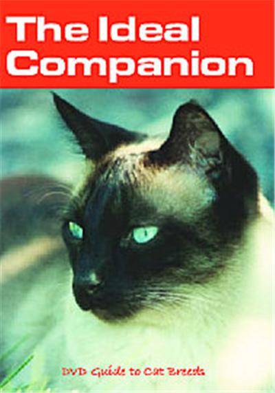 The Ideal Companion DVD Guide To Cat Breeds - DVD multizone