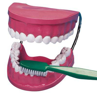 Non communiqué La Bouche - Les Dents + Brosse A Dent Geante - Jouet multimédia