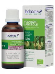 Ladrôme Extrait de Plante Fraîche Bio Plantain Lancéolé 50 ml - Flacon 50 ml
