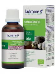 Ladrôme Extrait de Plante Bio Gingembre 50 ml - Flacon 50 ml