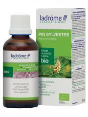Ladrôme Extrait de Plante Fraîche Bio Pin Sylvestre 50 ml - Flacon 50 ml