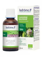 Ladrôme Extrait de Plante Bio Cardère Sauvage 50 ml - Flacon 50 ml