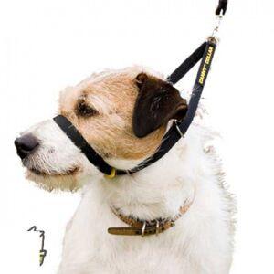 Canny Compagny Collier licol Canny Collar pour empêcher de tirer sur la laisse T3 - Publicité
