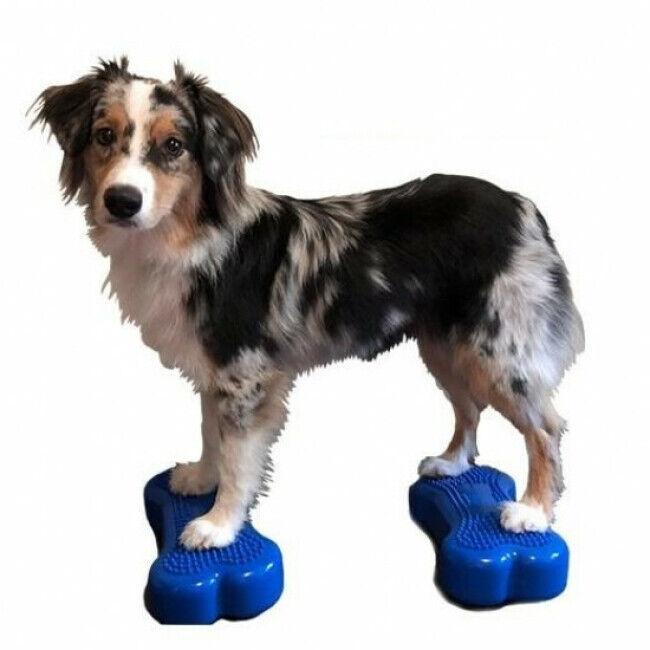 FitPaws Coussin travail de l'équilibre pour chien Fitbone Mini lot de 2 - Coloris bleu