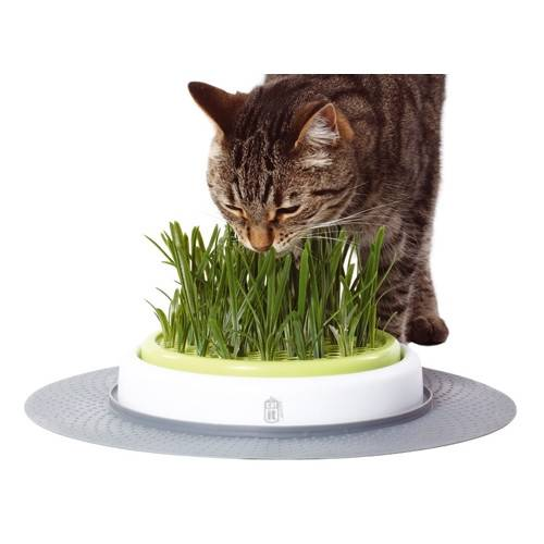 Cat'it Jardin d'herbe pour chat Senses Design CatIt