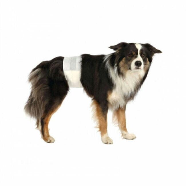Trixie Couche culotte jetable pour fuite urinaire chien mâle Trixie - Lot de 12 Taille S-M