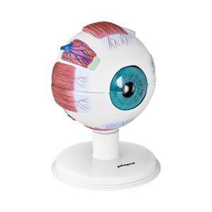 physa Maquette de l'œil humain - Échelle 6:1 PHY-EB-1 - Publicité