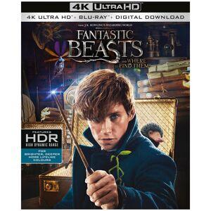 Warner Home Video Les Animaux Fantastiques 4K Ultra HD - Publicité