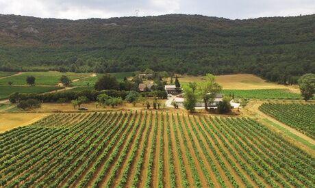 Domaine De La Mongestine Découverte de l'œnologie, visite du domaine et dégustation pour 1 ou 2 personnes au Domaine De La Mongestine