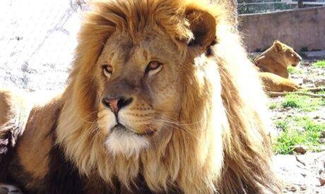 Zoo-Fauverie du Mont Faron 2, 3 ou 4 entrées adulte ou/et enfant pour le Zoo-Fauverie du Mont Faron à Toulon