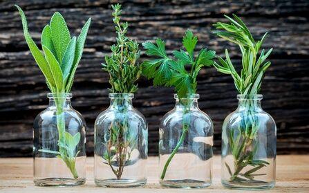Meformer Formation conseiller en plantes médicinales et phytothérapie avec Meformer