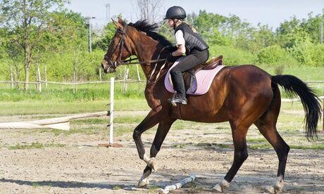 Centre équestre du marais 4h de cours de poney ou cheval au Centre Equestre du Marais