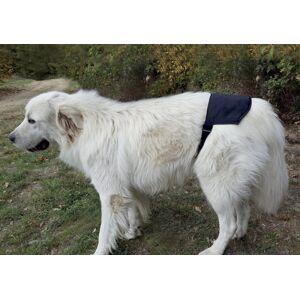 Auris Ceinture magnétique pour chien Doggy Mag de grande ou moyenne taille - Publicité