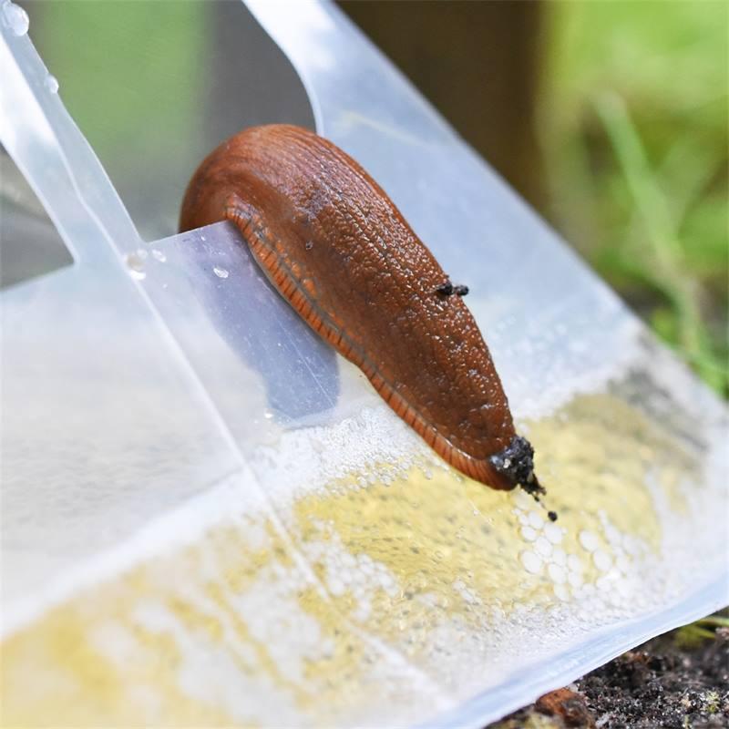50 pièges à escargots SlugEx de VOSS.garden, pour combattre les escargots sans poison, piège à bière