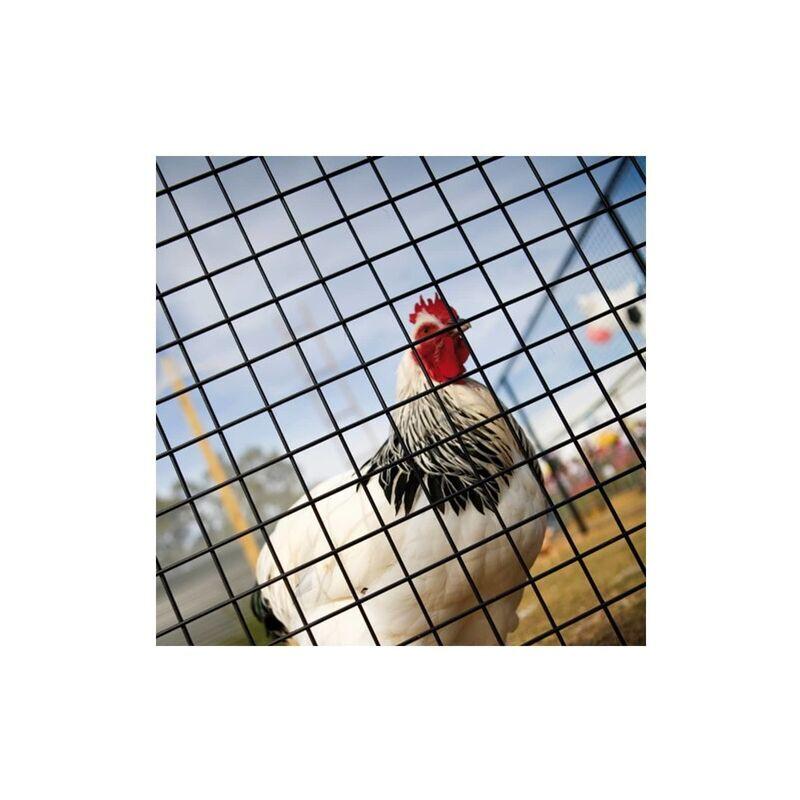 DESTOCKOUTILS Grillage galvanisé PVC vert soudé maille carrée pour volière 50cmx25m