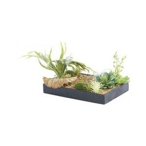 Carlo Milano Tableau végétal avec cadre - Herbacées - 30 x 20 cm - Publicité
