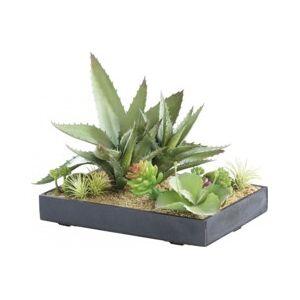 Carlo Milano Tableau végétal artificiel avec cadre - Succulentes - 30 x 20 cm - Publicité