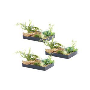 Carlo Milano 3 tableaux végétaux avec cadre - Herbacées - 30 x 20 cm - Publicité