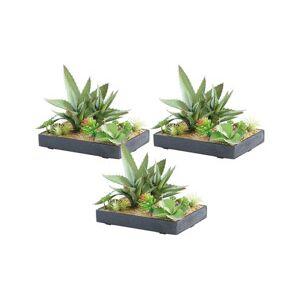 Carlo Milano 3 tableaux végétaux artificiels avec cadre - Succulentes - 30 x 20 cm - Publicité