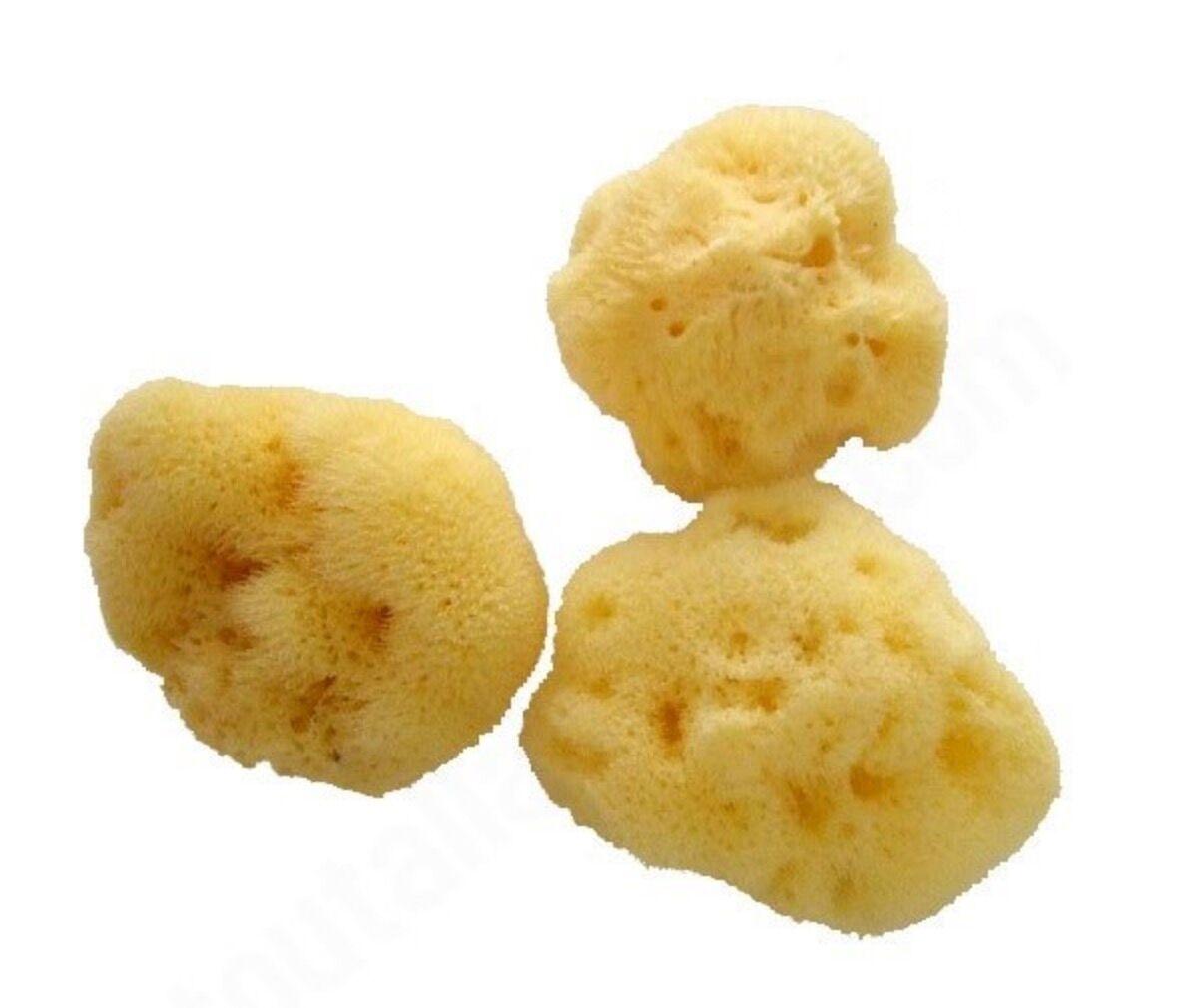 ANAé ANAE Lot de 3 Eponges Menstruelles Mensi - 6-7 cm