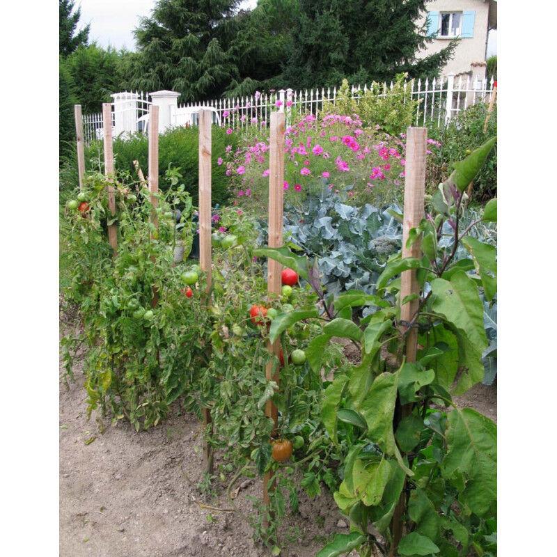 Jardin et Saisons Piquet de tomates en bois 150 cm + cône anti pourrissement