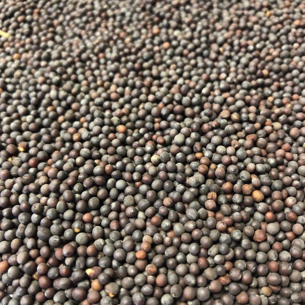 Louis Moutarde Brune Bio - Graines 100g - Tisane Brassica junicea L.