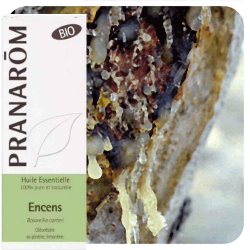 Pranarôm Encens (oliban) Bio - Huile essentielle de Boswellia carteri 5 ml - Pranarôm
