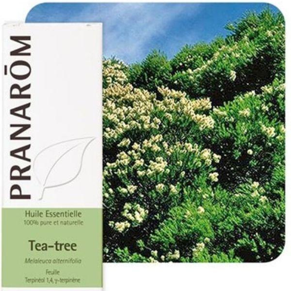 Pranarôm Tea tree (Arbre à thé) - Huile essentielle de Melaleuca alternifolia 10 ml - Pranarôm
