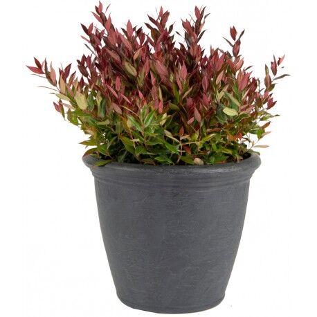 Mega Collections Bac à plantes en plastique rotomoulé Rinca Kiri anthracite D.50xH.41cm - MegaCollections