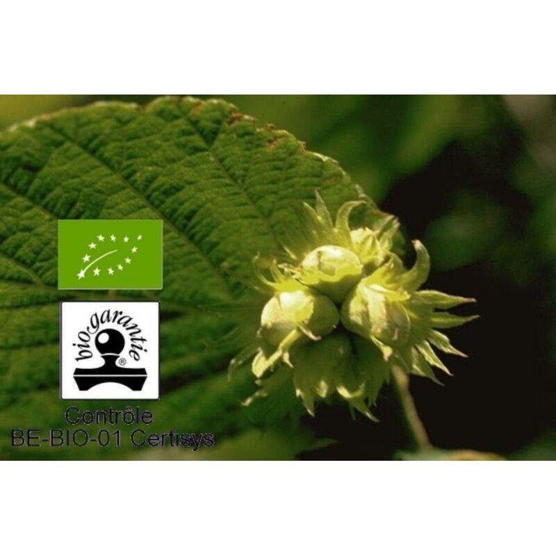 Floressence Synergies Huile végétale de noisette bio nourrit et hydrate la peau 100 ml