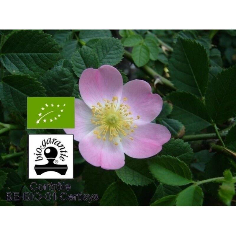 Floressence Synergies Huile végétale bio rose musquée répare et cicatrise la peau 100 ml