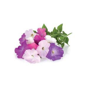 Click and Grow Recharge triple de Pétunias pour Smart Garden - Click and Grow - Publicité