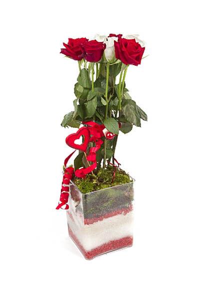 Roses d'Antibes SENTIMENTS EN FUSION