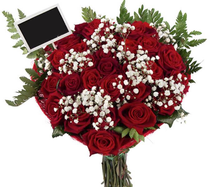 Roses d'Antibes CRI D'AMOUR
