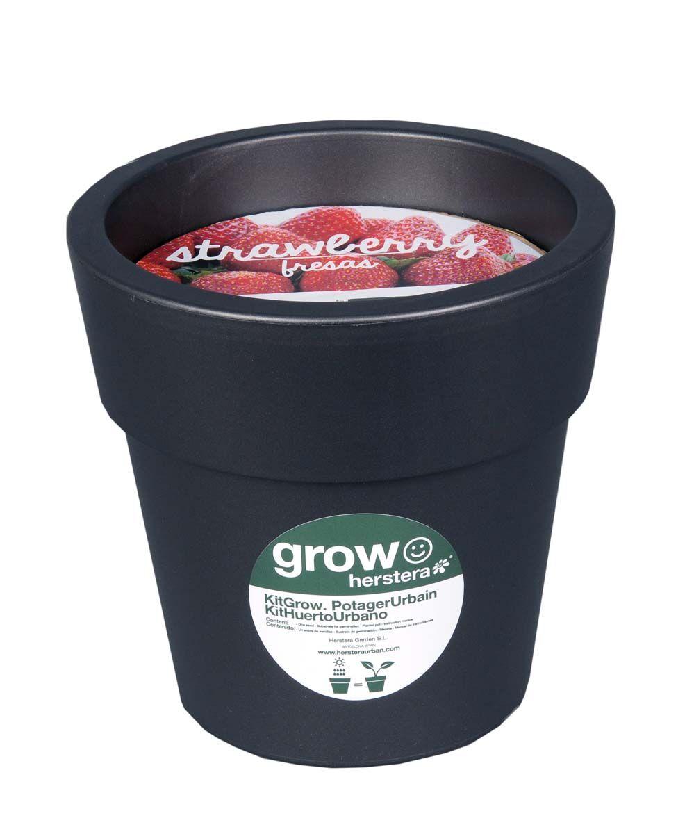 """Zago """"Kit fraises à faire pousser en pot 24 cm anthracite - ZAGO"""""""