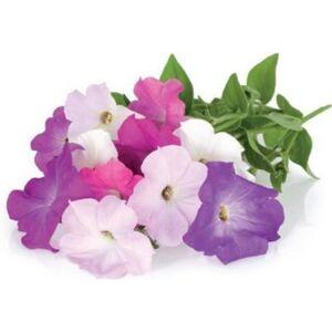 Click And Grow Recharge jardin intérieur Click And Grow Petunia lot de 3