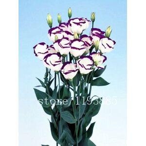 SVI 100pcs / paquet violet Graines de Lisianthus rares semences graines de eustoma Graines de fleurs Bonsai pour Maison & Jardin - Publicité