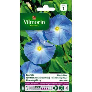 Vilmorin 5323541 Ipomée  grande fleur, Bleu, 90 x 2 x 160 cm - Publicité