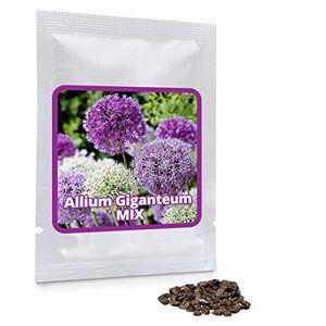 Magic of Nature AIL D'ORNEMENT (Allium giganteum) Mélange violet et blanc 2 x 30 graines/pack Résistant au froid d'hiver - Publicité