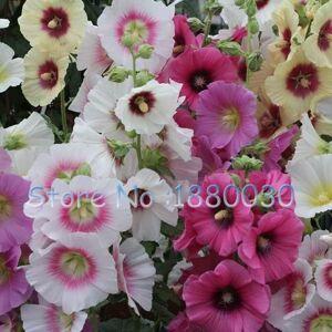 SVI Rare graines de roses trémires japonais 100% vraies graines de 15 couleurs différentes de fleurs en pot bonsa bricolage maison jardin 50PCS Althaea rosea - Publicité