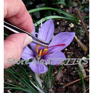 SVI graines 100PC Safran, graines de fleurs de safran, graines de crocus safran, Jardin des fleurs de plantes, graines Bonsai - Publicité
