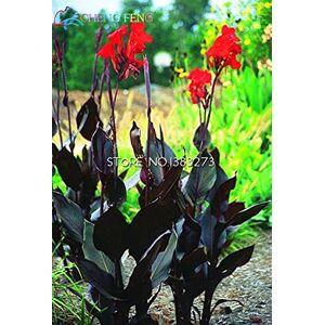 SVI 10 Pcs Canna Graines Belle Seed Flower Mix Indica Lily Plantes Jardin Fleurs Bulbes extérieur pot Bonsai Flores. SeedsAndPlants cadeau - Publicité