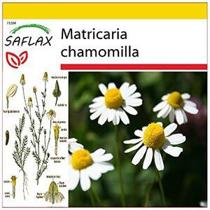 SAFLAX Kit de culture Camomille sauvage 300 graines Matricaria chamomilla - Publicité